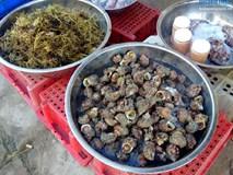 """Hải sản """"độc"""" lạ, tươi roi rói tại chợ cá sáng sớm trên đảo Lý Sơn"""