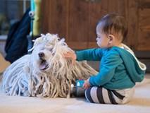 """Những chú cún cưng """"cute lạc lối"""" của các đại gia làng công nghệ"""