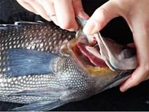 """Ăn cá tươi """"roi rói"""" tốt hơn hay ăn cá đã chết? Ý kiến của chuyên gia sẽ khiến bạn bất ngờ"""