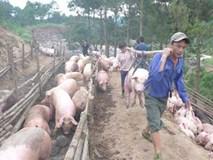 Trung Quốc mua gom thịt lợn: 'Không cẩn thận, lại phải giải cứu'