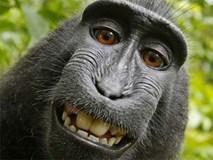 Người đứng sau bức ảnh 'con khỉ selfie' khánh kiệt vì kiện tụng