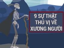 9 sự thật thú vị về hệ thống xương người
