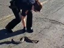 Nữ cảnh sát giật đùng đùng khi bắt rắn trên đường