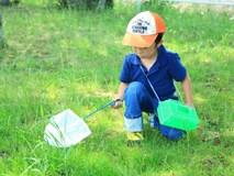 """Thích thú với cách người Nhật dùng côn trùng làm """"giáo cụ"""" dạy trẻ"""