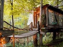 Bên trong ngôi nhà trên cây mộng mơ đang gây sốt trên Airbnb