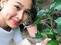"""Thích mê vườn rau trái """"ăn mãi không hết"""" của hoa hậu Dương Mỹ Linh trên đất Mỹ"""