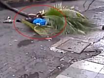 """Đang đi đường, nữ MC nổi tiếng chết tức tưởi vì bị cây dừa """"từ trên trời rơi xuống"""" đổ ập vào người"""