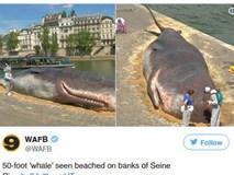 """Cá voi khổng lồ """"phơi nắng"""" giữa lòng Paris khiến người dân và du khách vô cùng kinh ngạc"""