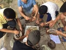 Nghệ An: Dân đổ xô bắt ong đất bán cho thương lái Trung Quốc