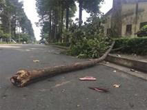 Cô gái bị nhánh cây rơi trúng đầu ở Sài Gòn đã tử vong, bỏ lại đứa con thơ đang bị bệnh tim