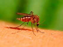 Những ai thường hay bị muỗi đốt nhất?