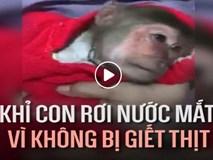 Khỉ con rơi nước mắt vì không bị giết thịt khiến ai cũng xúc động