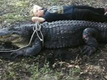 Clip: Bơi giữa đàn cá sấu hơn 20 con, người đàn ông khiến người xem run sợ