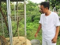 Vườn rau sạch mướt mắt trong căn biệt thự 2000m2 của ca sĩ Việt Hoàn