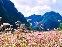 Chuẩn bị lịch trình lên Hà Giang tháng 10 ngắm hoa tam giác mạch