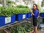 Ngưỡng mộ bà mẹ Hà thành trồng rau, nuôi chim gà trên sân thượng-14