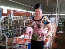 """Người phụ nữ kỳ lạ: Từ 2 con lợn, giờ thành đại tỷ phú """"50 tỷ"""""""