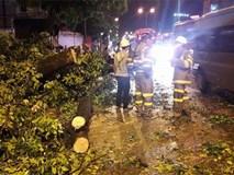 Ảnh hưởng bão số 6, Hà Nội mưa to gió lớn làm đổ cây cổ thụ chắn ngang đường