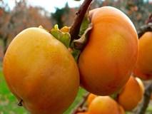 Lợi ích sức khỏe của quả hồng giòn