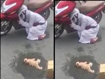 Cô chủ khóc hết nước mắt vì mèo chết do tai nạn giao thông