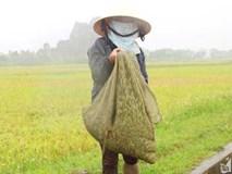 """Săn đặc sản """"tôm bay"""" nông dân xứ Nghệ kiếm tiền triệu mỗi ngày"""