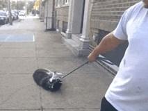 Clip hài: Chú chó giở trò 'lầy lội' vì ham chơi không muốn về nhà