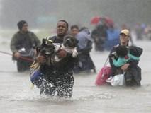 """Thay vì bỏ của chạy lấy người khi bão đến, người Mỹ đã chọn """"sống chết"""" cùng thú cưng vượt qua thiên tai"""