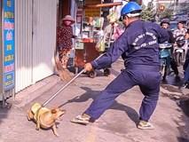 Chủ nhà quyết bảo vệ chó thả rông khi bị bắt
