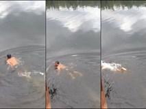 Người đàn ông lao xuống sông để chứng minh mình có thể kiểm soát được đàn cá sấu, vậy nhưng cái kết thật bi thảm