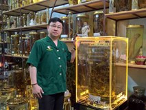 Củ sâm Ngọc Linh 'độc' nhất Việt Nam, đại gia Hàn trả tiền tỷ không bán