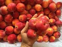 5 loại táo Tàu đang bán đầy chợ Việt, chị em dễ nhầm lẫn