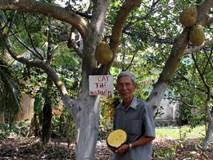 Làm giàu ở nông thôn: Chỉ trồng 100 cây mít không hạt, thu 1 tỷ/năm