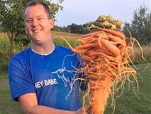 Kinh ngạc củ cà rốt có hình dáng kì dị phá kỷ lục thế giới