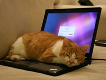 Những việc bạn thường làm khiến laptop bị tàn phá một cách nhanh chóng