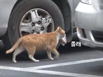 Bày sẵn không cần, nhưng cho đồ ăn vào túi lại tha đi và lý do xúc động của cô mèo hoang