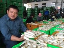 Lão nông tỷ phú, trồng củ cải thu 400 tỷ đồng/năm