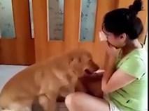 Chú chó đáng yêu dỗ dành cô chủ khóc khiến dân mạng thích thú