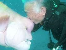 Bí ẩn câu chuyện 'người và cá' thân thiết với nhau hơn 25 năm ở Nhật Bản