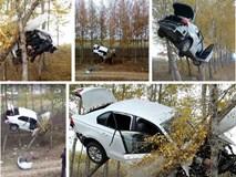 """Tránh đụng độ xe khác, ô tô """"bay"""" thẳng lên hàng cây bên đường rồi mắc kẹt giữa không trung"""