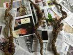Thế giới tam thất dại giá hàng trăm triệu của đại gia Hà thành-8