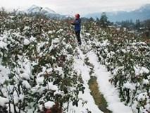 Mùa đông năm nay có rét kỷ lục như năm 2008?