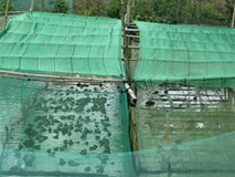 Lạ mà hay: Cho ếch ngồi trên, cá trê bơi ở dưới, 3 tháng lãi 35 triệu đồng