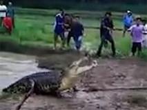 """Clip: Đám đông khiếp vía khi thấy cá sấu khổng lồ dài 5m lao lên bờ, """"truy sát"""" dân làng"""