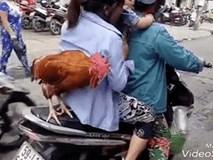 Vật nuôi đứng yên sau xe máy của người phụ nữ khiến mọi người phải giơ máy chụp ảnh, quay clip