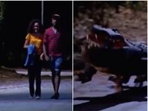 Clip hài: Trò chơi cá sấu lên bờ phiên bản 'cún cưng'