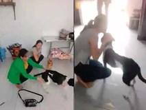 Chú chó bị chặt chân ở Phú Quốc sợ hãi bỏ chạy khi được cho về với chủ cũ