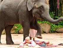 Bạn có đủ can đảm để cho voi mát-xa như thế này?