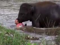 Tưởng người đàn ông đang bơi chết đuối, chú voi con lao thẳng xuống sông giải cứu