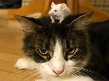 5 chú mèo co rúm người sợ hãi một chú chuột