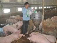 Mất 100.000 tỷ vì khủng hoảng thịt lợn: Gửi 'tâm thư' kêu lên Thủ tướng